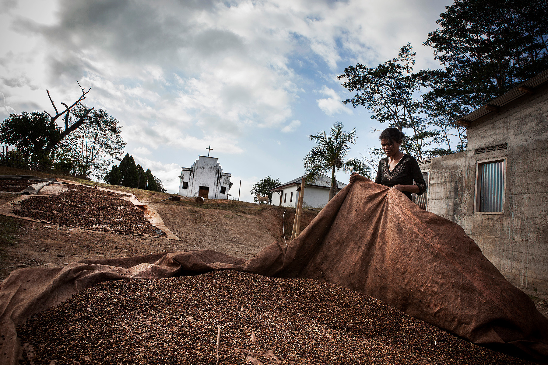 A coffee farmer in Ermerra prepares dried coffee beans for transport to Dili